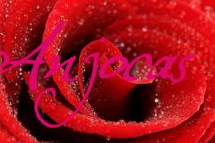 Anjocas5